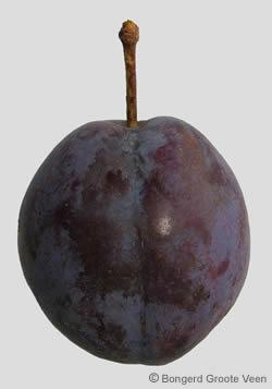 Bleue de Belgique vrucht